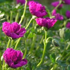 Красивые цветки с длинными лепестками