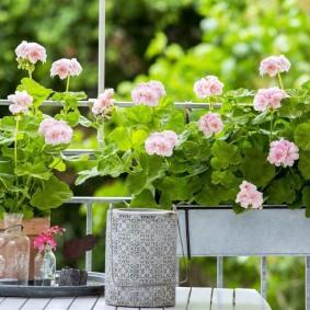 Нежно-розовые цветы в садовых контейнерах
