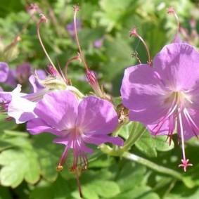 Красивые цветки приятного оттенка