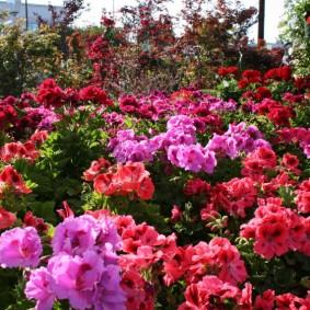 Яркая клумба с красивыми растениями
