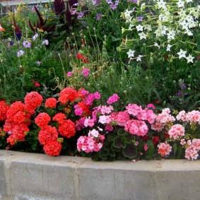 Красные цветы вдоль бордюра клумбы