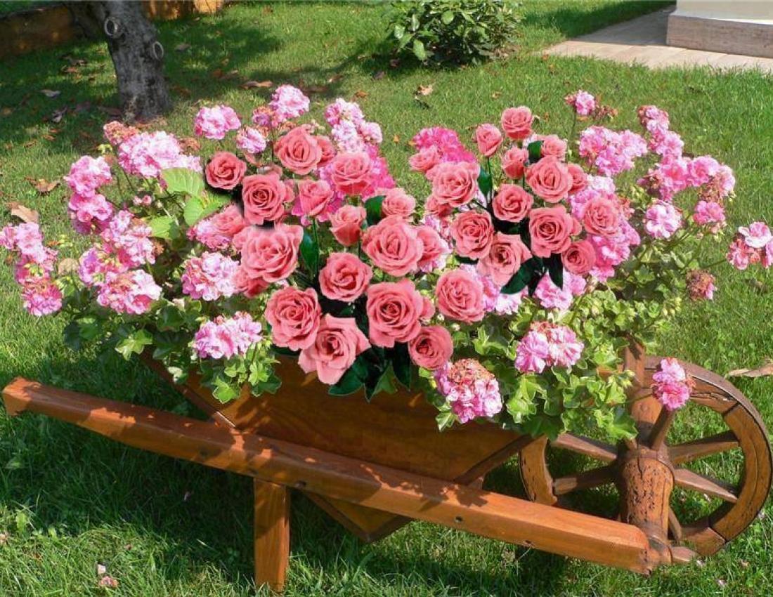 Вечнозеленые садовые растения фото и названия каждого