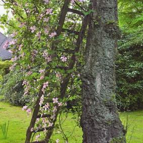 Старая лестница в роли эффектного декора сада