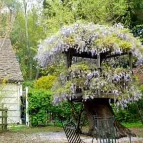Цветущая беседка на старом дереве