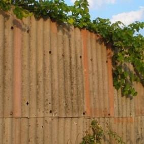 Ветки хмеля на старом заборе