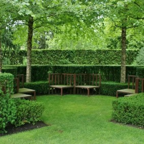 Ландшафт сада с вечнозелеными растениями