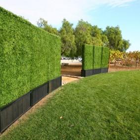 Зеленые стенки из декоративных кустарников
