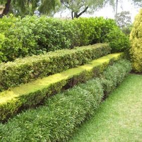 Многоуровневая живая изгородь из вечнозеленых растений