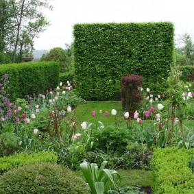 Зеленая стенка для защиты сада от ветра