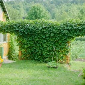 Садовая арка с виноградом на дачном участке