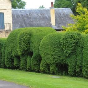 Фигуры слоников из быстрорастущих растений