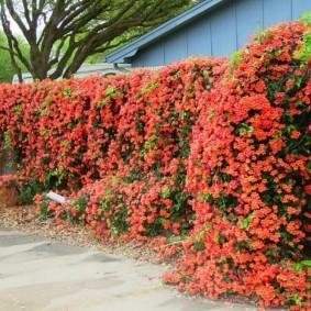 Цветущая стенка из быстрорастущих растений