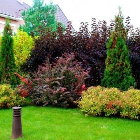 Живая изгородь из комбинированных растений в осенний период