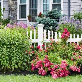 Красивый палисадник с цветущими растениями