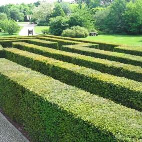 Садовый лабиринт из живой изгороди