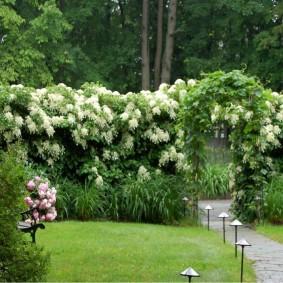 Садовая арка с гортензией черешковой