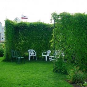 Зона отдыха в саду за живой изгородью