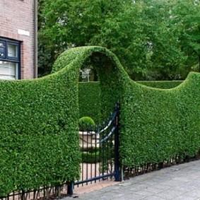 Живая изгородь с аркой над дорожкой