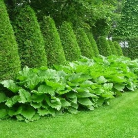 Живая стена вместо садового забора