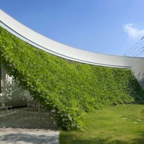 Зеленый навес из вьющихся растений