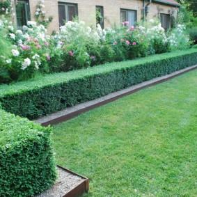 Зонирование сада живыми стенками