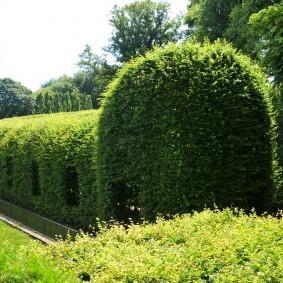 Фигурная обрезка живой изгороди на садовом участке