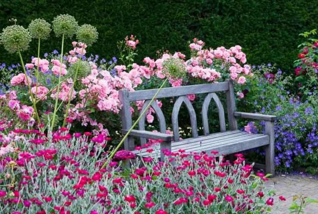 Декоративный лук и пеларгония у садовой скамейки