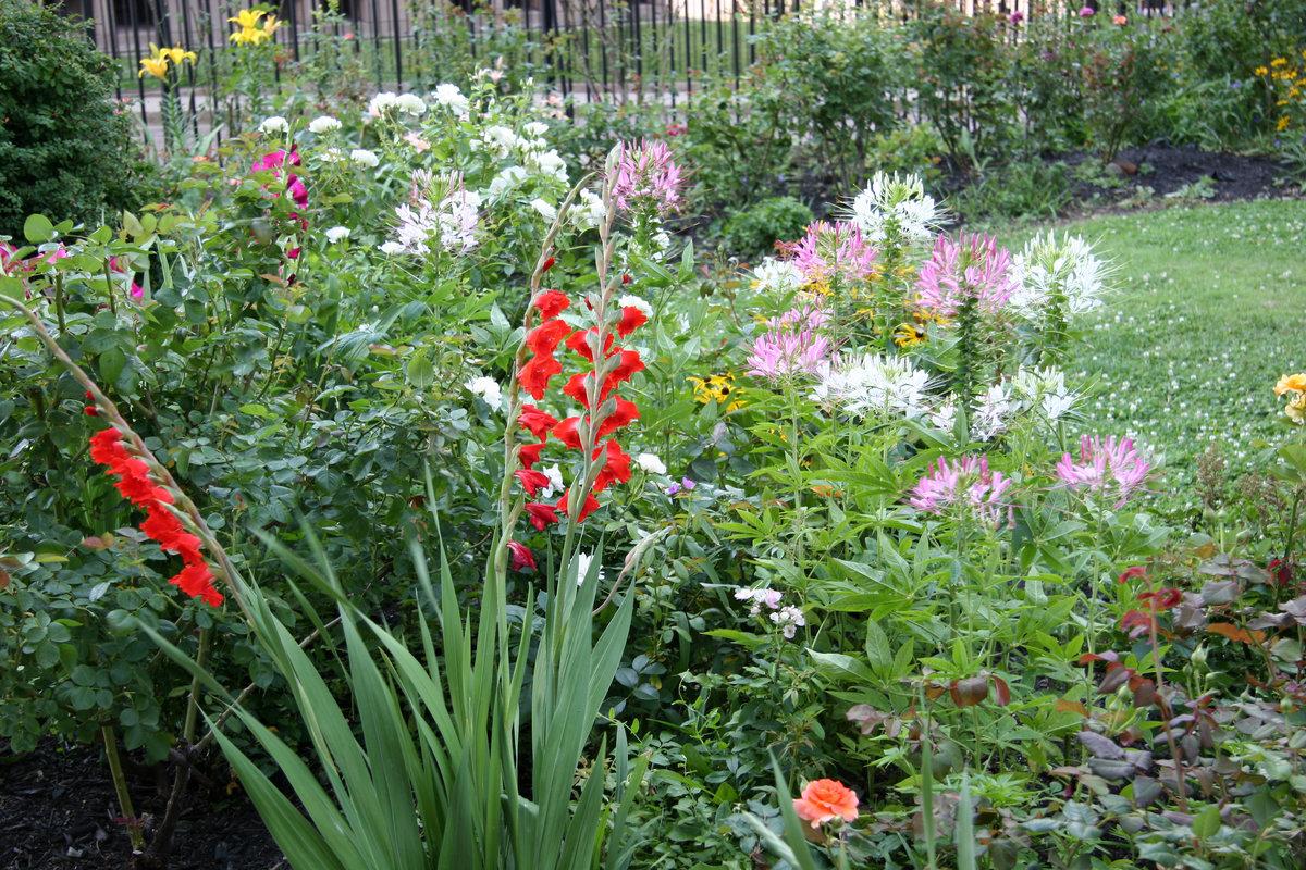 гладиолусы с другими цветами