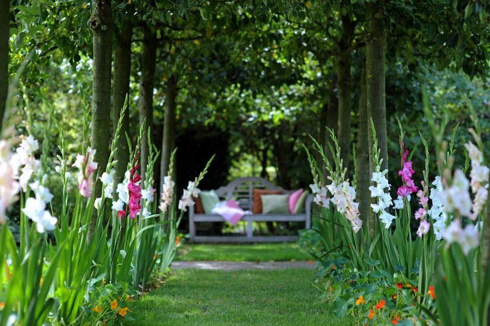 гладиолусы в саду идеи
