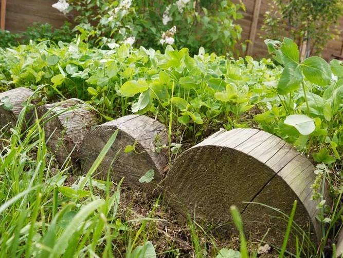 Бордюр из спилов деревьев на огородной грядке