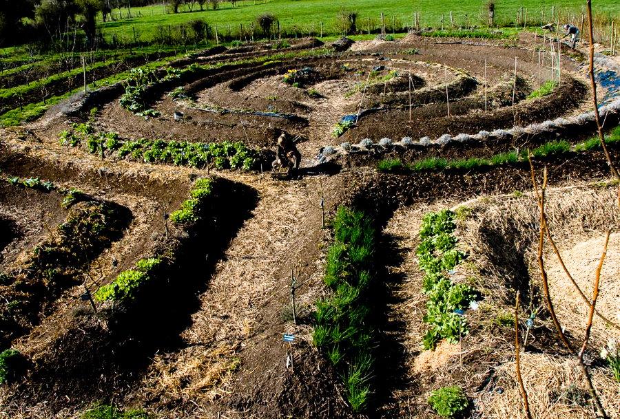 Загородный участок с грядками по методу фермера Хольцера