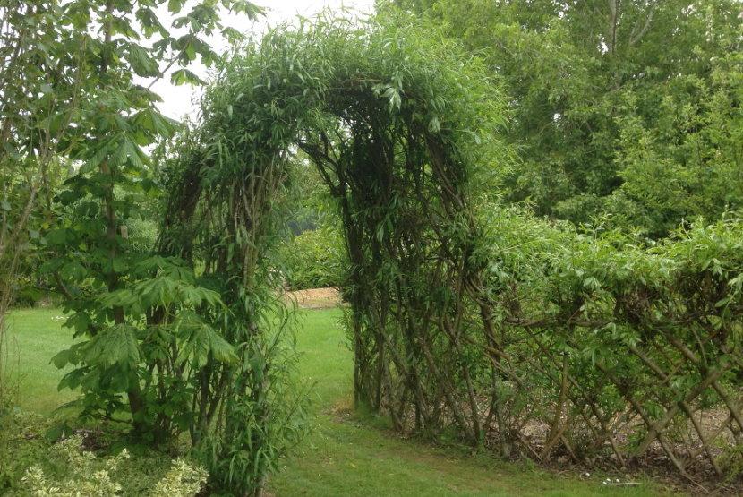 Живая арка из обыкновенной ивы на загородном участке