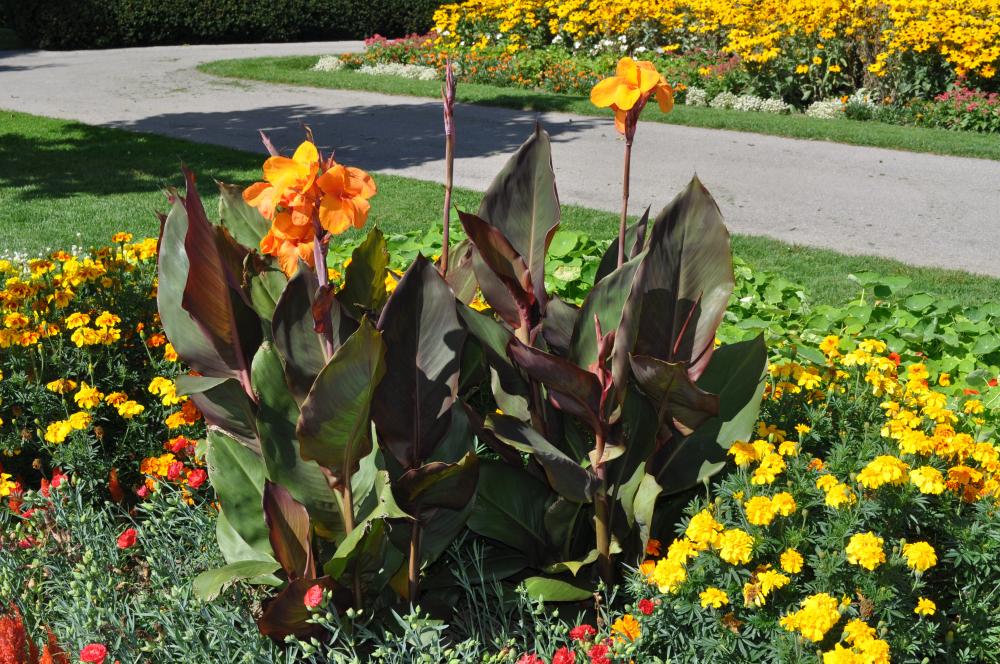 канна в саду дизайн фото
