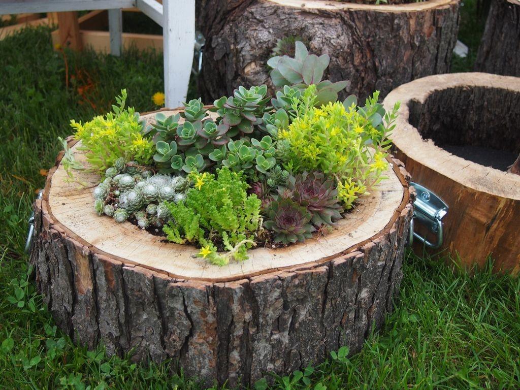 Садовая клумба из пенька толстого дерева