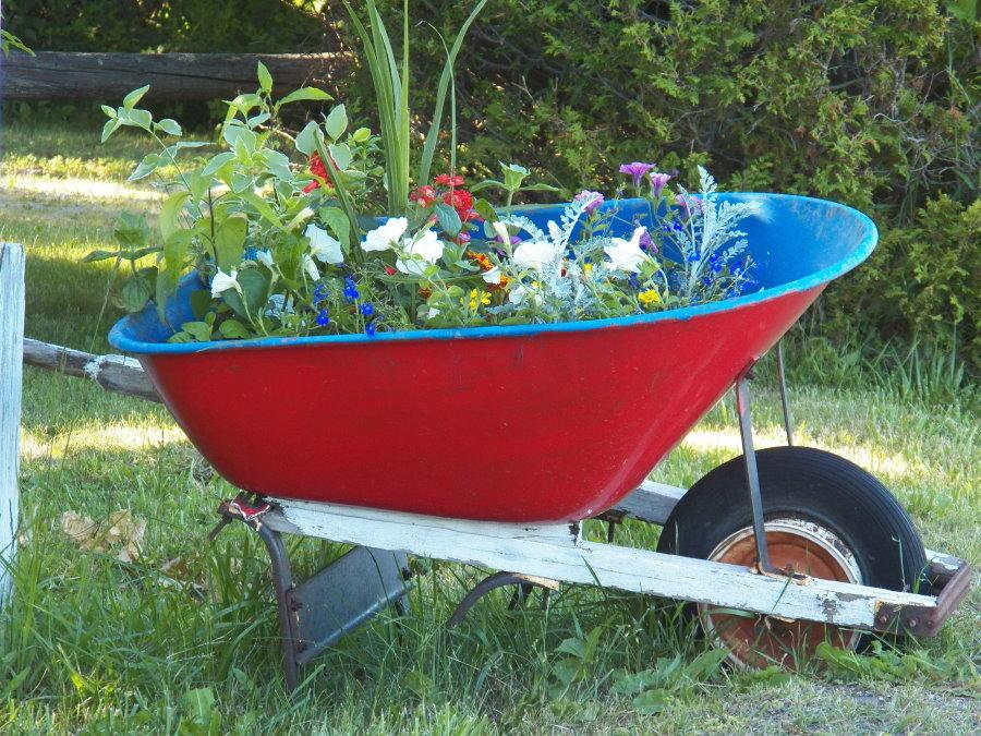 Клумба с однолетними цветами из садовой тачки