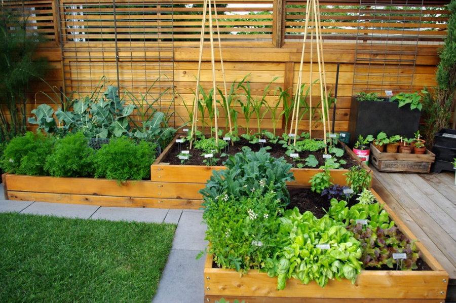 Компактный огород с деревянными грядками