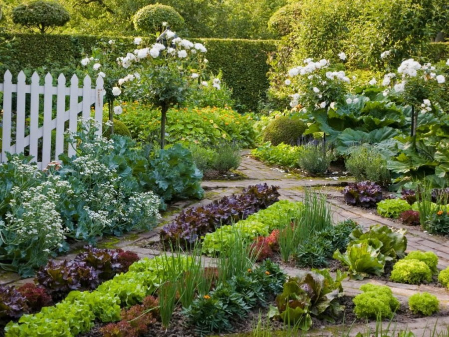 Штамбовые многолетники в ландшафте садового участка