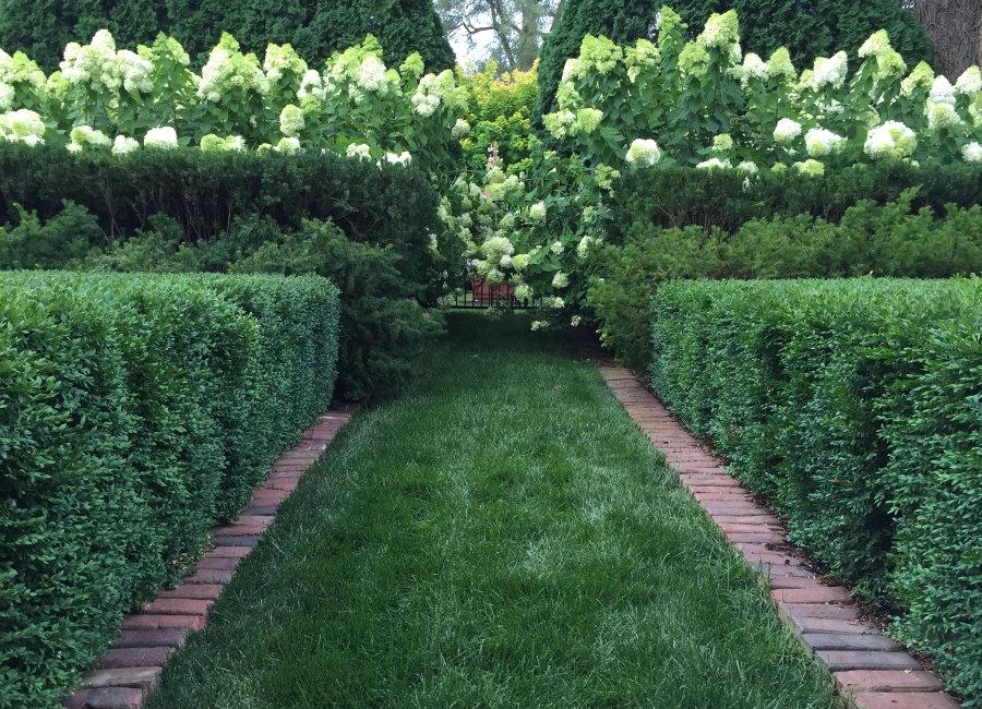 Комбинированная живая изгородь из зеленых кустарников