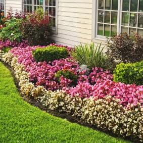 однолетние цветы в саду декор