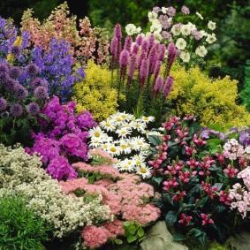 однолетние цветы в саду декор фото