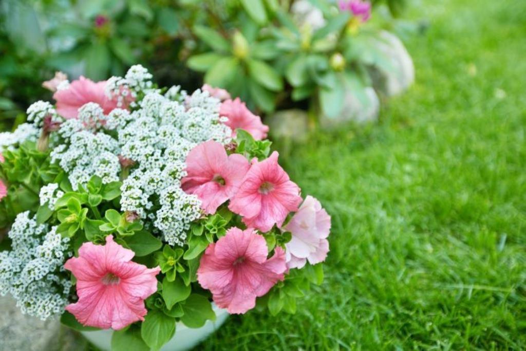 однолетние цветы в саду дизайн идеи