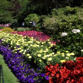 однолетние цветы в саду фото декора