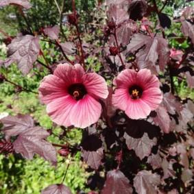 однолетние цветы в саду фото дизайн