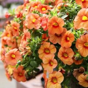 однолетние цветы в саду фото дизайна