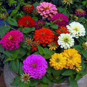 однолетние цветы в саду фото идеи