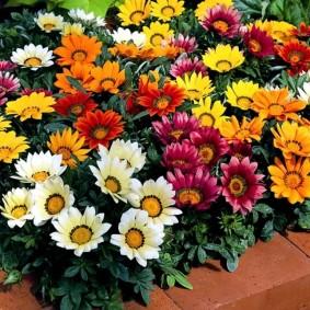 однолетние цветы в саду идеи