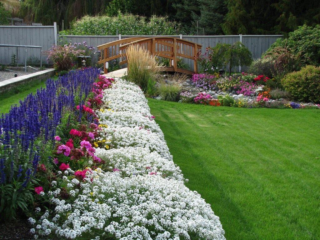 однолетние цветы в саду идеи декора