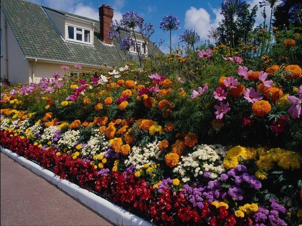 однолетние цветы в саду идеи дизайн
