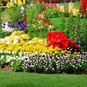 однолетние цветы в саду оформление фото