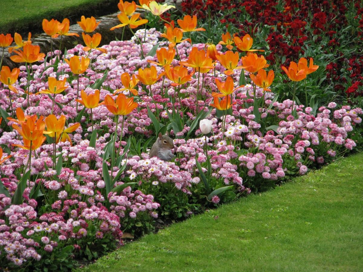 однолетние цветы в саду оформление
